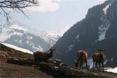 Wildpark-Aurach
